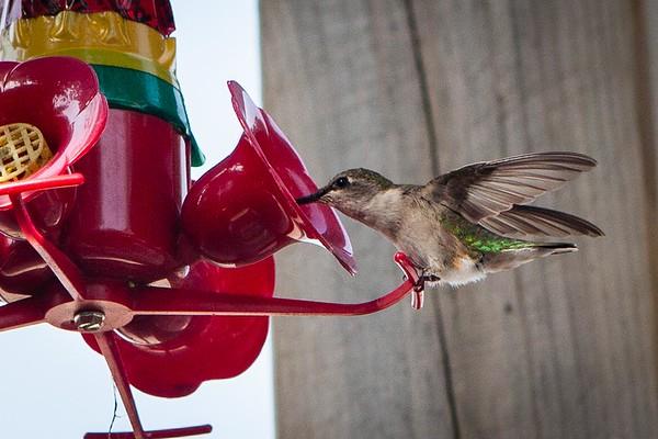 Cottage Hummingbird Feeder