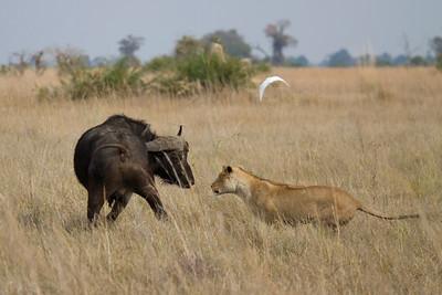 Zimbabwe and Botswana 2014