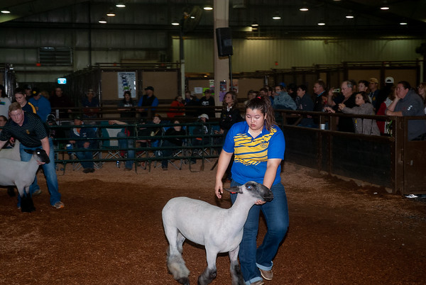 OYE Sheep Showmanship 3/18/2019