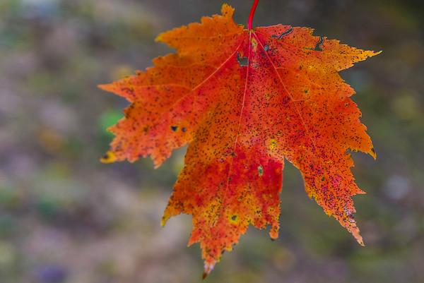 Fall Leaves & Rabun Dam - 11-07-20