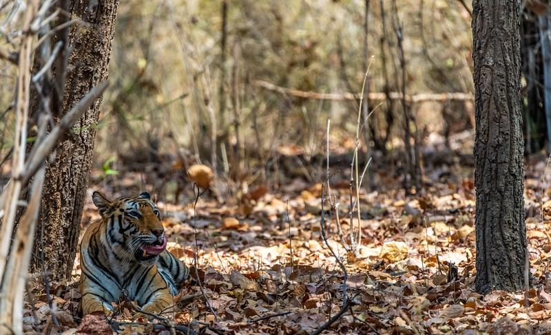 India_April_2019-110.jpg