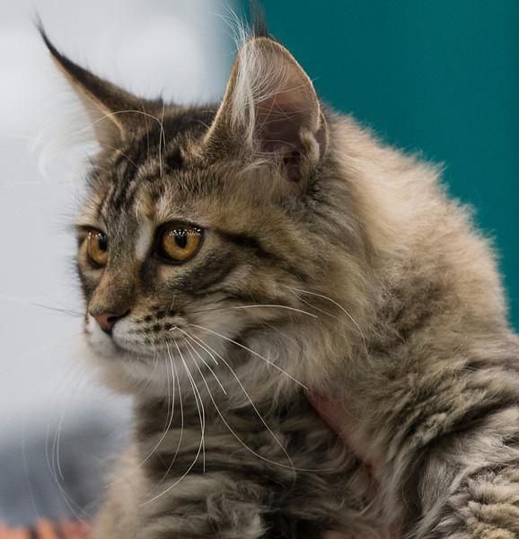 CatShow2014186.jpg