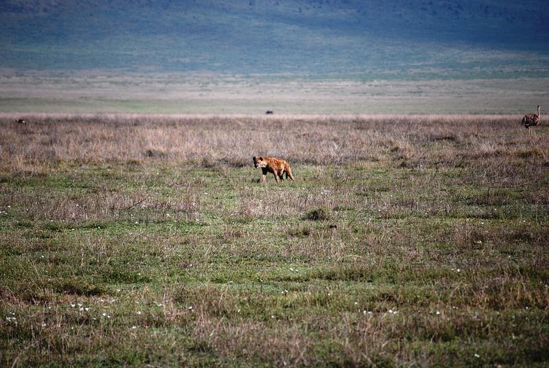Ngorongoro (26).JPG