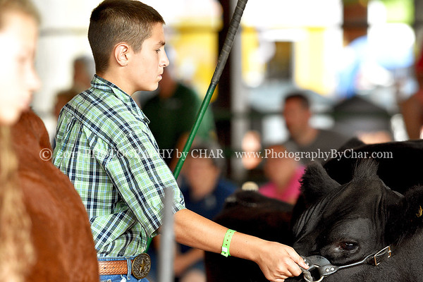 Youth & Open Beef Breeding Showmanship and Market 8-15-2017