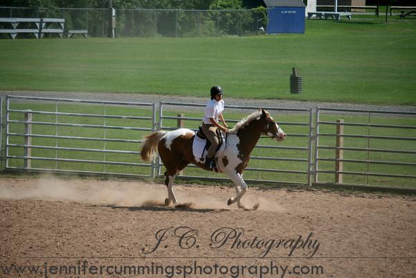 Green Horse - Equitation, Pleasure, Show Hack