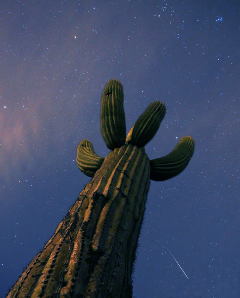 Reaching for the Sky, Tucson