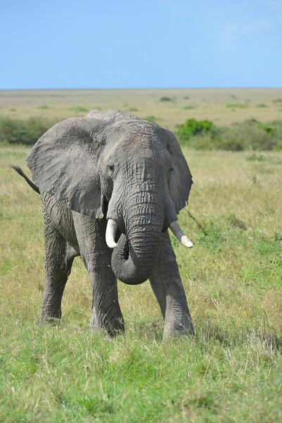 East Africa Safari 242.jpg