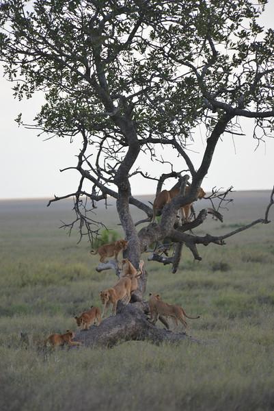 East Africa Safari 367.jpg