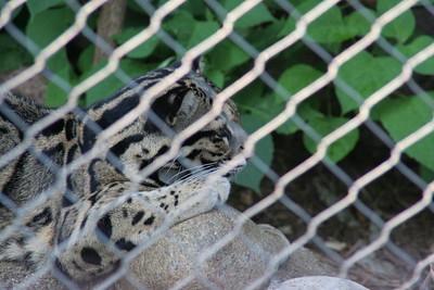 National Zoo - July 12, 2009