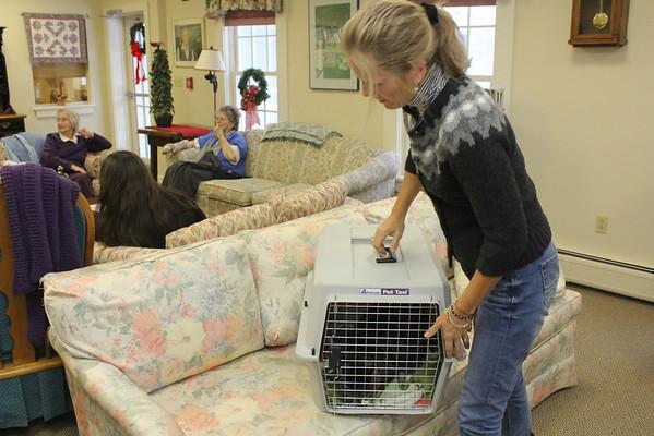 Sophie Seniors for Seniors - Pets