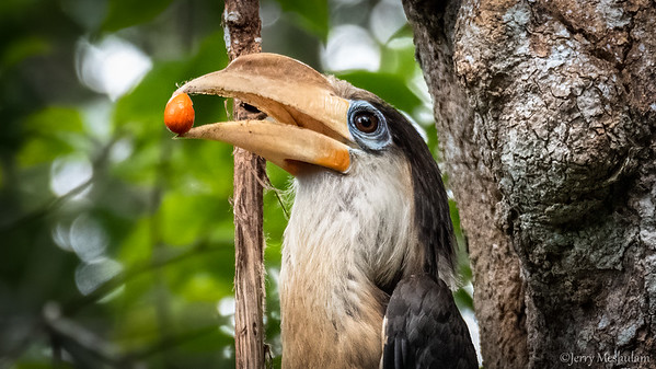 Thailand: Birds & Wildlife