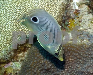 FISH SPECIES PHOTOS