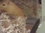 Our Current Gerbils