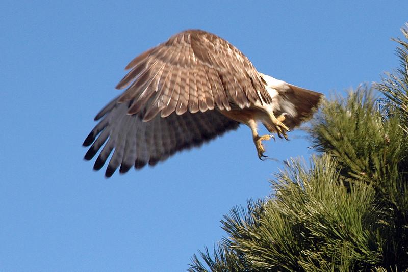 Taking to flight.jpg