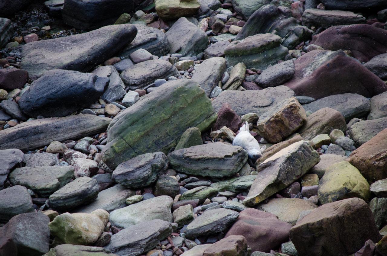 NC500 - Caithness - Seal pups!