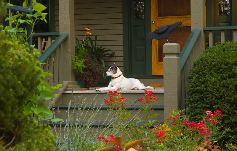 The front porch was a frequent hang out for surveying the landscape.