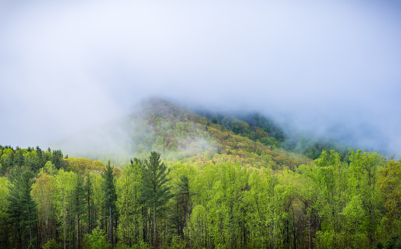 Doe Hill Fog