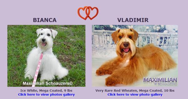 Bianca & Vladimir Puppies, DOB 2/07/2018