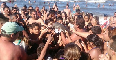 beachgoers-play-with-baby-dolphin-killing-it