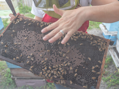 Big Island Bees Tour