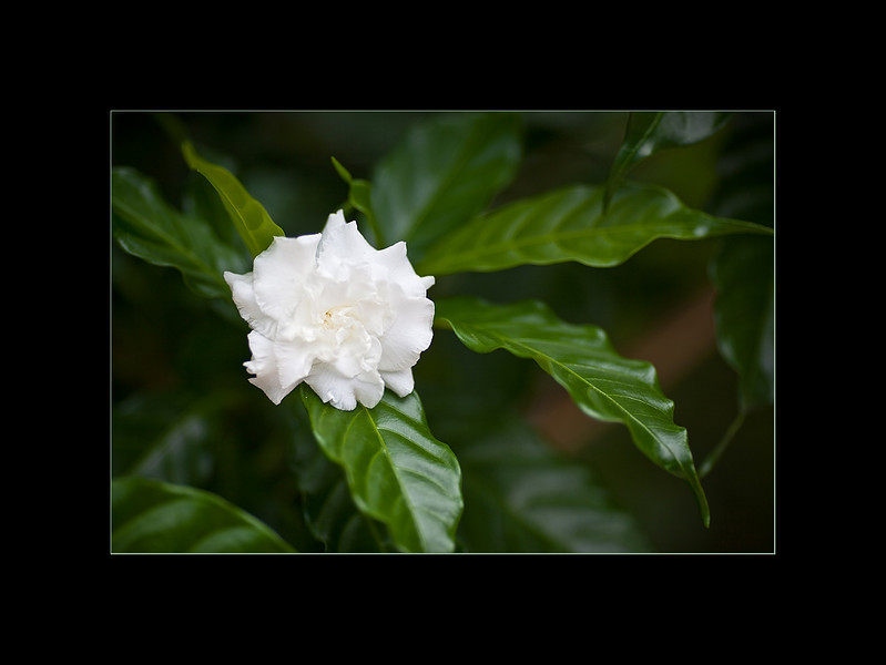 white flower small.jpg