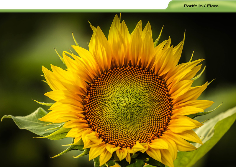 flore-portfolios.jpg