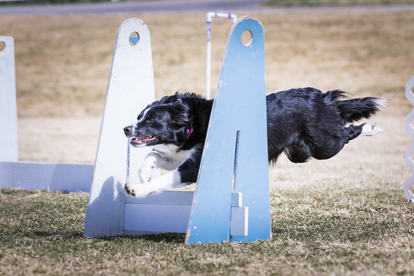Thunder Paws Flyball Team 03.12.17