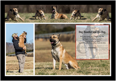 """ S H O O T E R "" - A  Twelve Month Old Belgian Malinois"