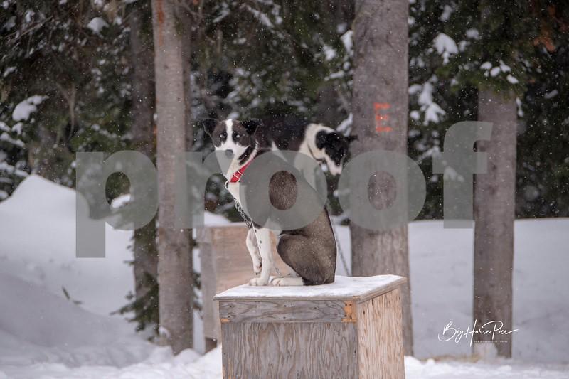 dog sled 26.jpg