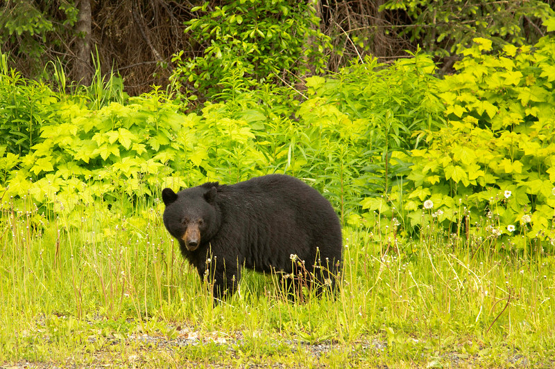 bear 84.jpg