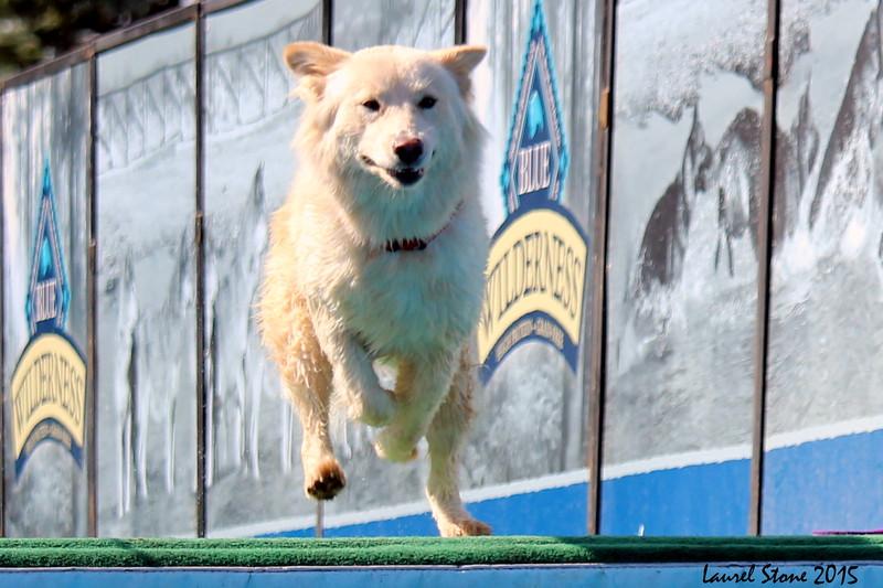 2015.8.5 Winnebago County Fair Dock Dogs (16).JPG