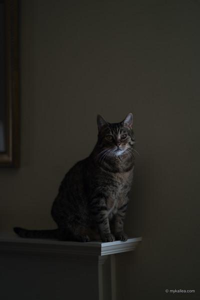 Pets-296.jpg