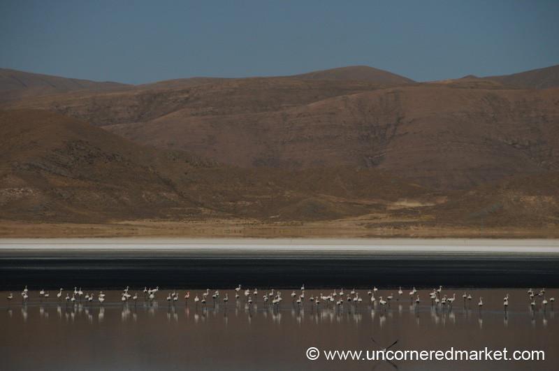Flamingoes and Tar Pits - Oruru to Tupiza, Bolivia