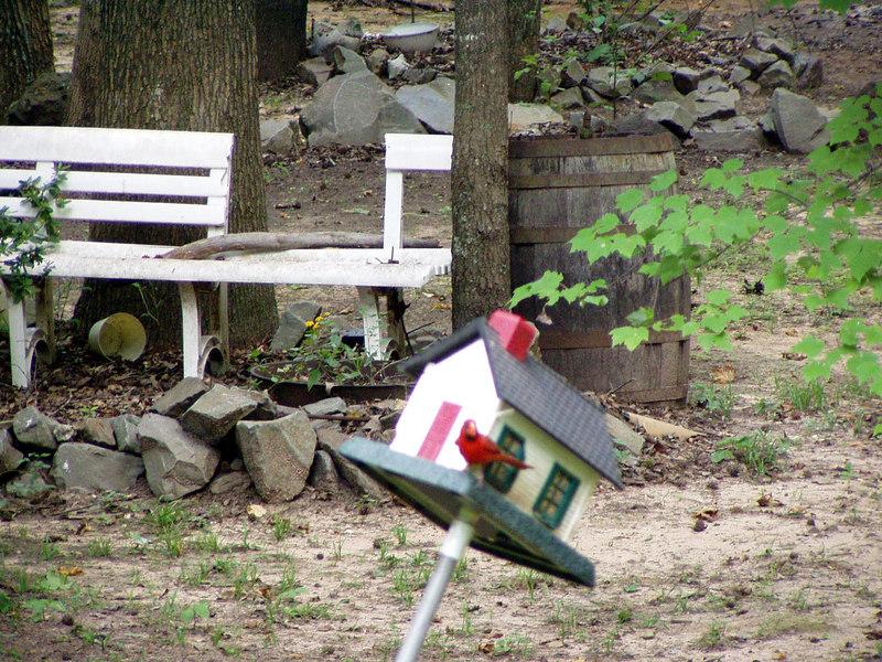 15. Red bird on feeder.JPG