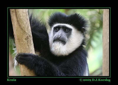Kenia 2009