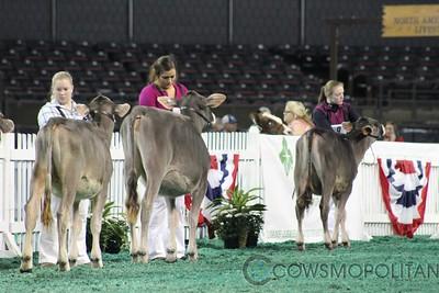 Southeast Natl Brown Swiss Heifers