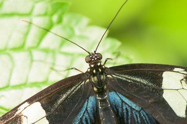 Butterflies Niagara Redux