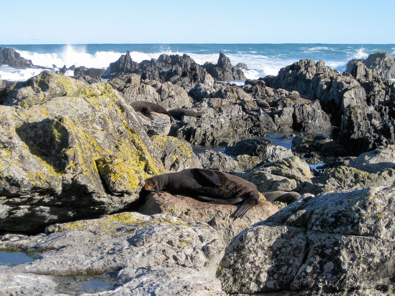 New Zealand fur seals at Sinclair Head