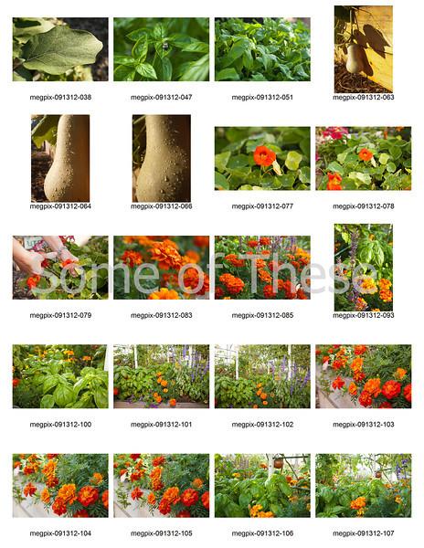 Plants Collage-3.jpg