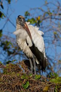 Everglades Birds 2012