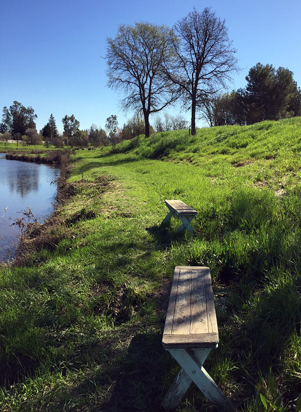 creek benches.jpg