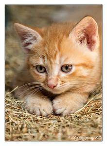 2017 Feral Kittens
