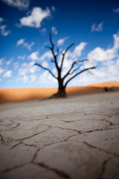 NAMIBIAN PELICANS & DUNES
