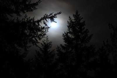 Nature After Dark