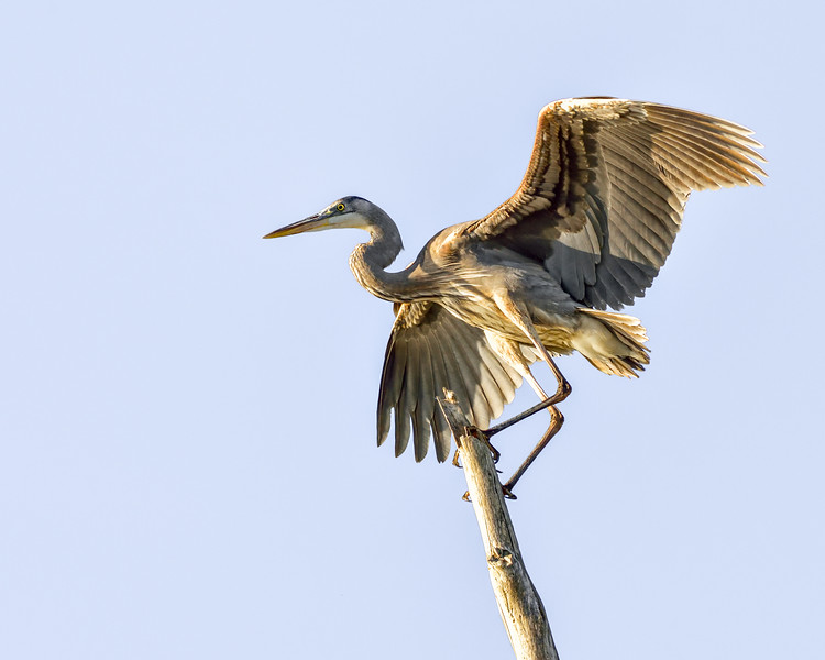 Elkhorn Slough - Moss Landing, CA USA