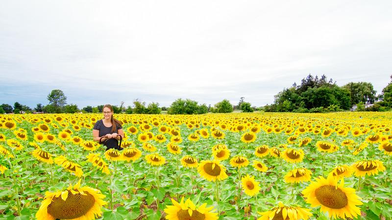 Bailey Sunflower feild composite2.jpg