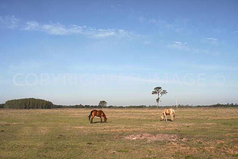 pasture1.jpg
