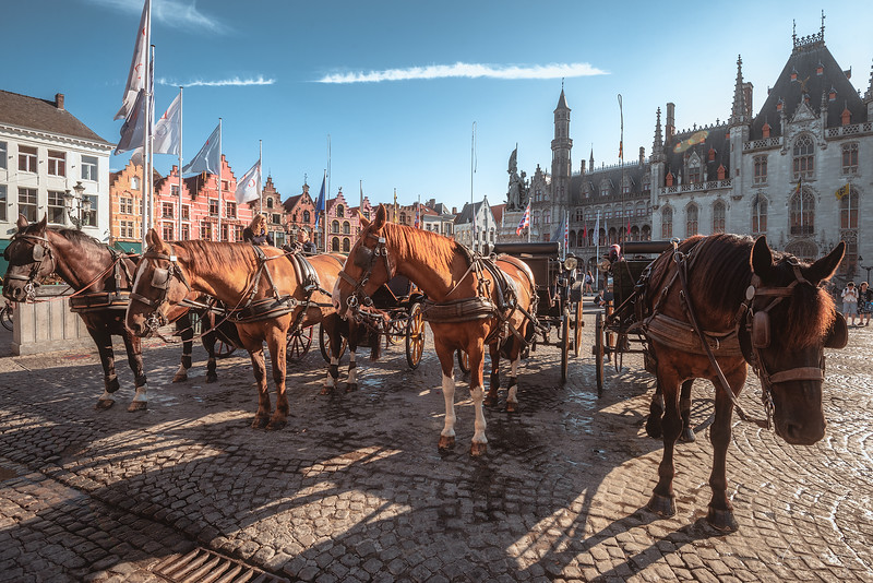 market-square-horses.jpg