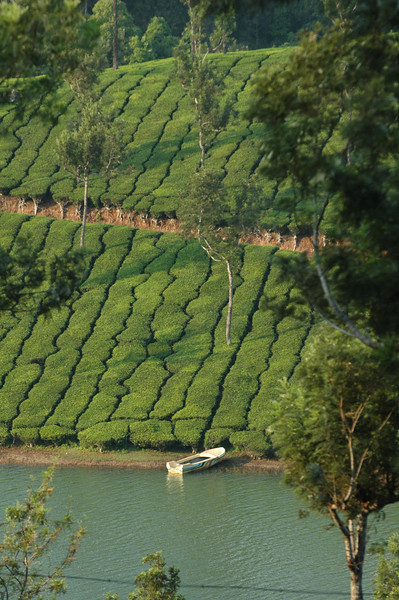 Boat on a lake near Munnar