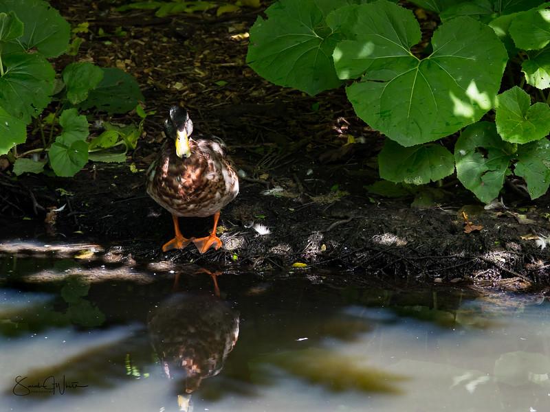 020716_London Wetlands_156.jpg